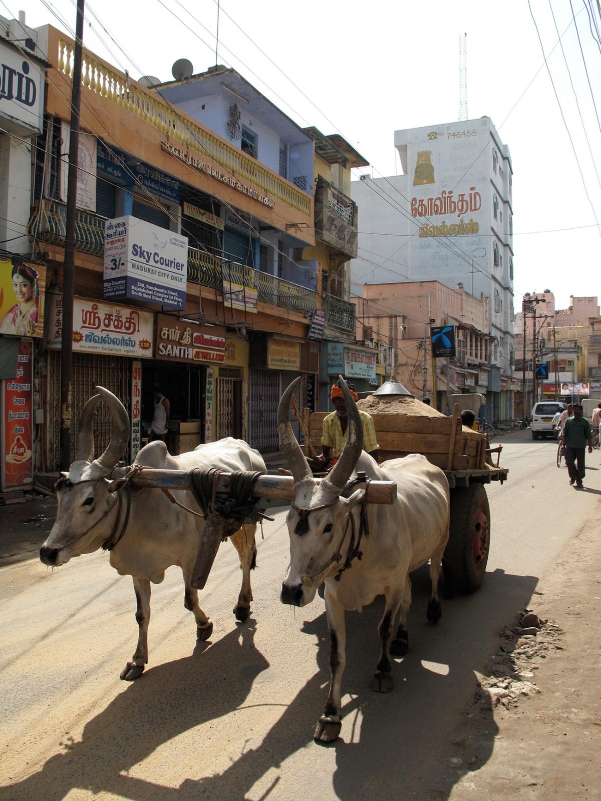 India_29